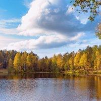 Осень на лесном озере 3 :: Виталий