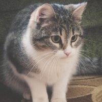 кошка :: Александра Тетерина