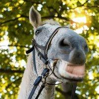 ..была на коне и под ..) :: Лилия .