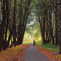 Быть может помнит нашу юность парк... :: Лесо-Вед (Баранов)