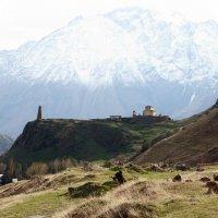 в горах Грузии :: Лидия кутузова