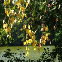 И снова осень... :: Маргарита Батырева