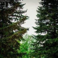 таинственный лес :: Виктория Левина
