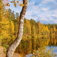 Осень на лесном озере 6 :: Виталий