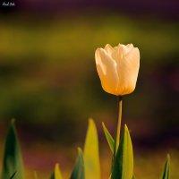 Тепло... :: Alent Vink