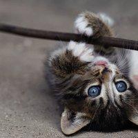 Игривый котенок :: AnnetSV