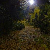 По ковру из листьев. :: Валерий Медведев