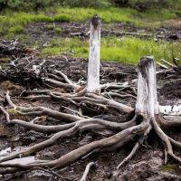 причудливые коряги в тундре :: Дмитрий Лемещук