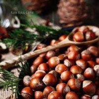Nuts :: Katie Voskresenskaia