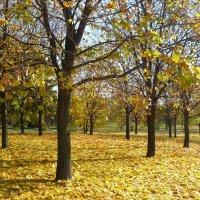 Осень пришла. :: Александр Атаулин