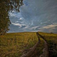 У дороги полевой 3 :: Сергей Жуков