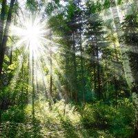 Солнечный свет :: Сергей Добрыднев
