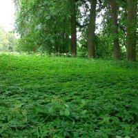 Зелёный ковёр :: ЕЛЕНА СОКОЛЬНИКОВА