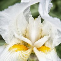 Цветок :: Виктория Велес