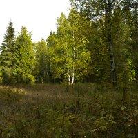 осенний лес :: petyxov петухов