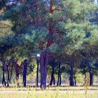 20 сентября – День леса. :: Валентина ツ ღ✿ღ