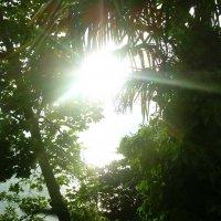 Сочи,море, солнце :: татьяна
