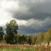 Осень уже не за лесами :: Владимир Гилясев