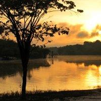 Утро в джунглях :: максим лыков