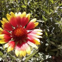 Осенний цветок :: Dana