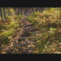 Осенняя прогулка :: Sergey
