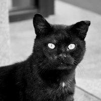 Чёрный кот :: Игорь Попов