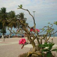 цветы Вьетнама :: youry