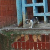 Два котёнка :: Нина Корешкова