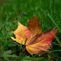Письмо Осени :: Saniya Utesheva