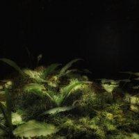 Ночь в лесу . :: Va-Dim ...
