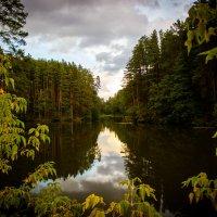 Лесное озеро :: Сергей Токмаков