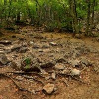 Каменная река :: Олег Потехин