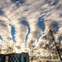 Метеопрогноз :: Александр Горбунов