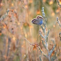 На закате лета :: Cергей Дмитриев