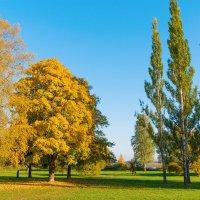 Осень на берегу Разлива 2 :: Виталий