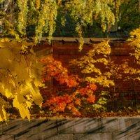 Осень живописец :: Виталий