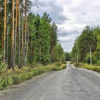 Дорога через лес. :: Валентина ツ ღ✿ღ