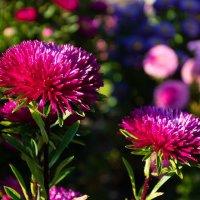 про цветы сбоку :: Сергей Анисимов