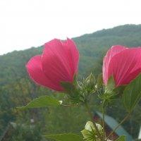 Горные цветы :: Надежда