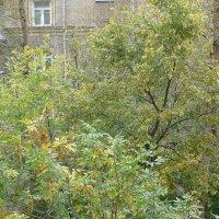 Что-то рано осень в гости к нам пришла... :: Татьяна Юрасова