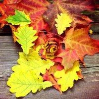 Разноцветные краски осени :: Марина Романова