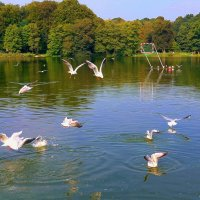 Чайки на озере :: Nina Yudicheva