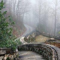 лестница в туман :: Elena Wymann