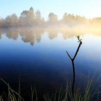 Утро на пруду :: Иван