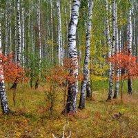 Краски сентября :: Геннадий Ячменев