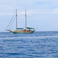 На морской прогулке... :: Светлана Игнатьева
