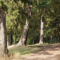 Дорога в лес :: Исаков Александр