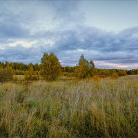 Заблудилось в лесу бабье лето... :: Александр Никитинский