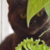 В листьях :: Ольга