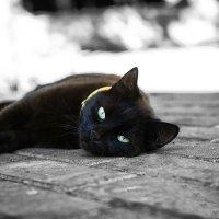...привычка отдыхать перед усталостью.. :: Лилия .